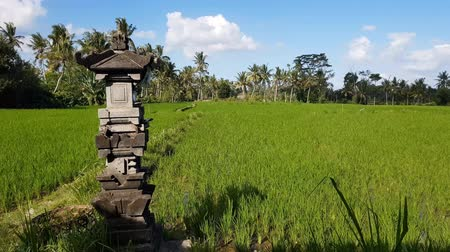 インドシナ : Rice Plantation in Bali, Indonesia