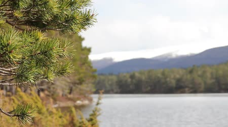 highland : View of the mountains and the lake in the Rothiemurchus forest, by Aviemore in Scotland