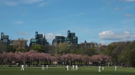 kriket : Time lapse of a cricket match in the Meadows Park in Edinburgh, Scotland Stok Video