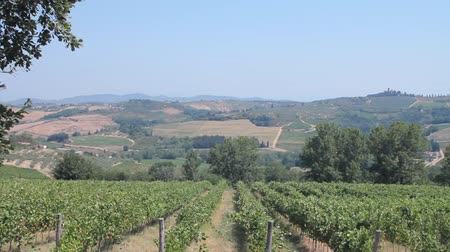 İtalyan : Panoramic of the countryside in Tuscany and of the vines of Chianti, one of the most famous wines in the world