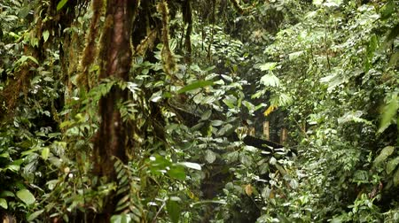 floresta tropical : Small waterfall in cloud forest in Mindo, Ecuador