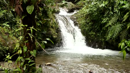 amazonka : Small waterfall in cloud forest in Mindo, Ecuador
