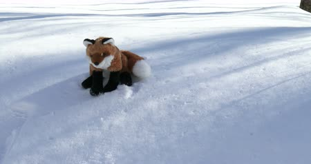 лиса : Little stuffed fox resting on the snow on a trail in winter