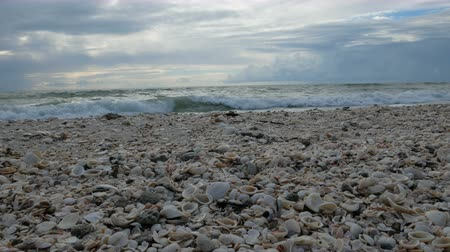 nápoles : Shells on the beach at the Barefoot Beach State Preserve in Florida, a land tortoise sanctuary Vídeos