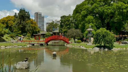 Red bridge on calm garden in the Japanese Garden (Jardn Japons) in Buenos Aires, capital of Argentina. Стоковые видеозаписи