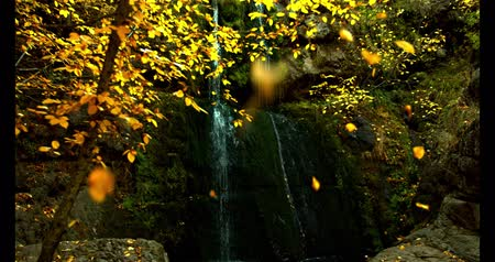 golden falls : Fall in the Forest