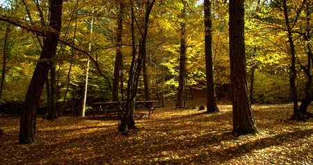 lak : Herfst in het bos Stockvideo