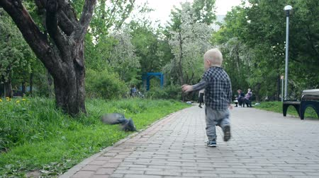 holubice : Boy playing with birds in city park. Child running around birds.