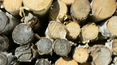 felling : Pile of wood logs ready for winter Stock Footage