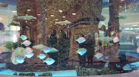 submerge : An aquarium in shopping center. A big aquarium in evening shopping center. Aquarium with fish in the shopping center ..