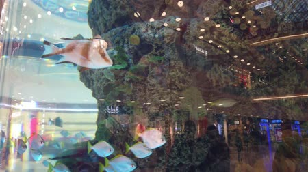 goldfish : An aquarium in shopping center. A big aquarium in evening shopping center. Aquarium with fish in the shopping center ..