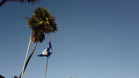 sosyalizm : Cuban Flag Palm Tree. Palm tree and blue sky. Stok Video