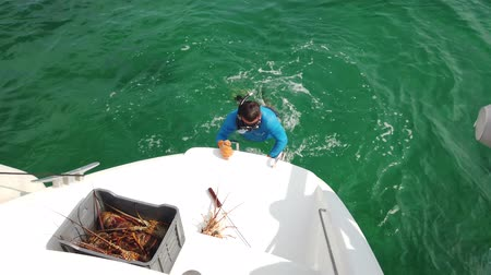 rákfélék : Varadero, Matanzas, Cuba, April 2019: A man catches lobster in the open ocean