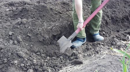 склеивание : Farmer plant digging beds for crops. Plant potatoes in the ground in spring.