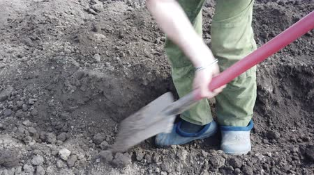Łopata : Farmer plant digging beds for crops. Plant potatoes in the ground in spring.