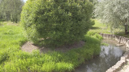 ditch : River stream view with green grass besides