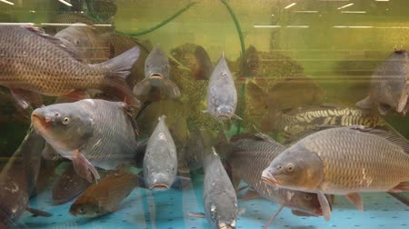 naživu : Fish in the aquarium at the supermarket counter. Dostupné videozáznamy