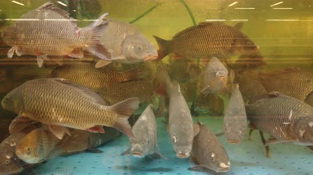 from behind : Fish in the aquarium at the supermarket counter. Stock Footage