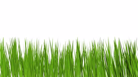 çim : green grass growing Stok Video