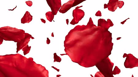 flower : Rose petals flying on white background, 3d animation