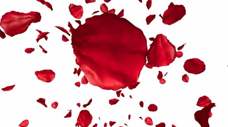 pétala : Rose petals flying on white background, 3d animation