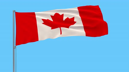 canadian maple leaf : Isolate flag of Canada on a flagpole fluttering in the wind on a transparent background, 3d rendering, 4k prores footage, alpha transparency Stock Footage