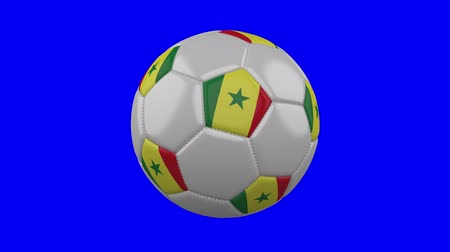 tek bir nesne : Soccer ball with Senegal flag rotates on blue chroma key background, loop