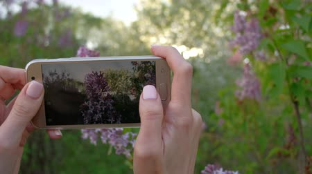 magenta flowers : Close up - Female takes photos of blooming lilac using smartphone in beautiful spring garden.