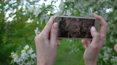 güzelleşmek : Close up - Female takes photos of blooming lilac using smartphone in beautiful spring garden.
