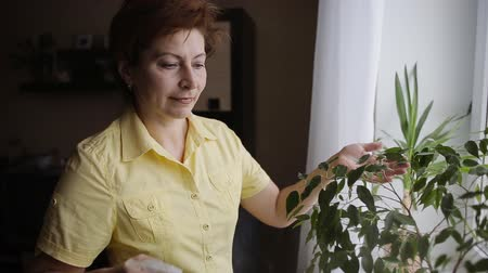 ficus : Women spraying water on indoor house plant Stock Footage