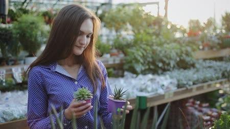 florista : Young woman buying green cactus at a garden center Stock Footage