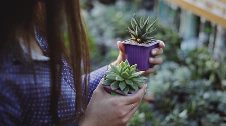 kaktus : Close up of woman`s hands holding two small cactuses in pot Dostupné videozáznamy