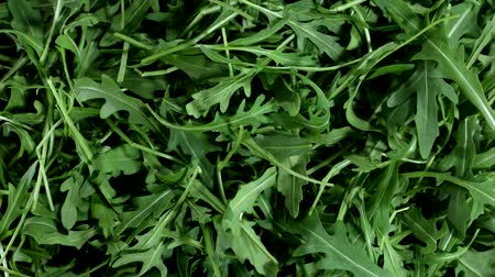 calorias : A lot of fresh green arugula leaves in stop motion, rucola. Background. Top view