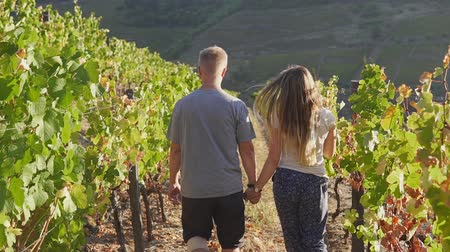 viticultura : Back view of couple holding hands and walking at sunset through the vineyard Stock Footage