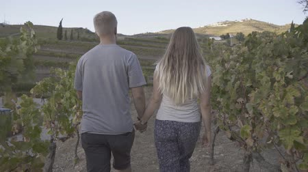 Back view of couple holding hands and walking through the vineyard Стоковые видеозаписи