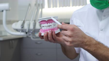 molar : Closeup of a male dentist holding jaw teeth model and explaining about gum. Health education.