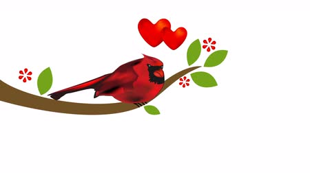 jardim : Cardinal on tree. Love heart valentines concept footage video clip