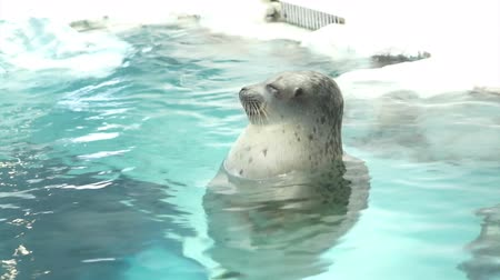 flutuador : seal floating in water and ice at aquarium