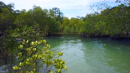 mangue : Video of Mangrove trees next to the ocean during low tide and high tide