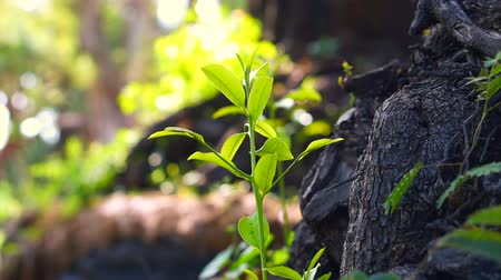 vida : abstract new life growing. Tree sprout from old trunk. Green natural background
