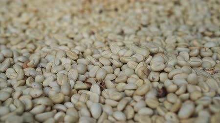 kahve çekirdeği : HD 1080 Raw white coffee beans close up