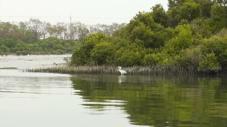mangue : Mangrove forest in Anping, Taiwan nature with birds