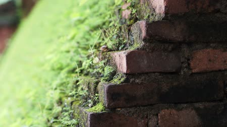 brickwall : Beautiful green moss grow on brick wall. Nature blending with architecture