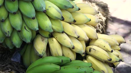 muz : Green unripe and yellow ripe banana cut and place for sell in market 4k Stok Video