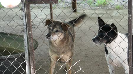 loved : Poor abandon dogs in shelter, wagging tail and waiting for new owner to adopt Stock Footage