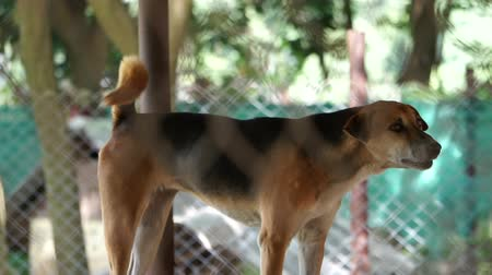 dog pound : Dogs in shelter behind cage net. Looking and waiting for people to come adopt