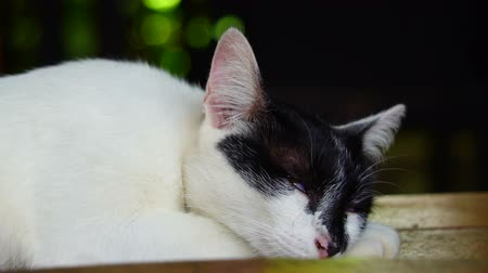 doesnt : White cat with black face with yellow eyes, looks bored and sleepy in slow motion 120fps