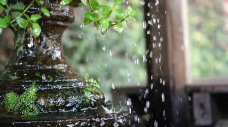feng : Water Drops and droplets from clay pot in tropical green garden slow motion 120 fps Stock Footage