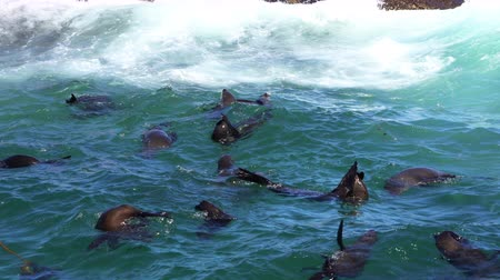 yanliŞ : Happy Wild Seals At South Africa Island Habour Stok Video