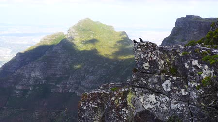 szpak : Table Top Mountain Birds Flying